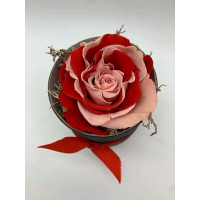 Örökrózsa piros-rózsaszín