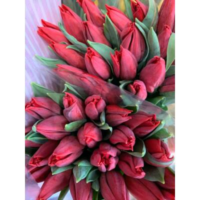 Tulipán 60 szál bordó/piros