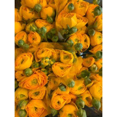 Sárga boglárka 10 szál